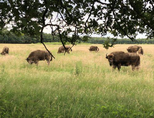 Nieuwe vorm van samenwerking natuurgebied de Maashorst